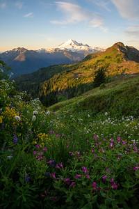 Wildflower filled meadows beneath Mount Baker in Washington.