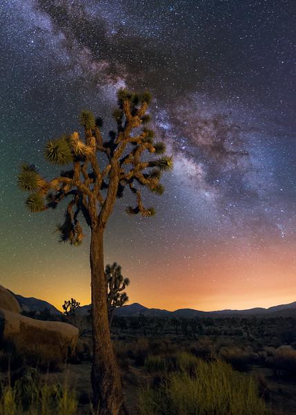 Joshua Tree at Night