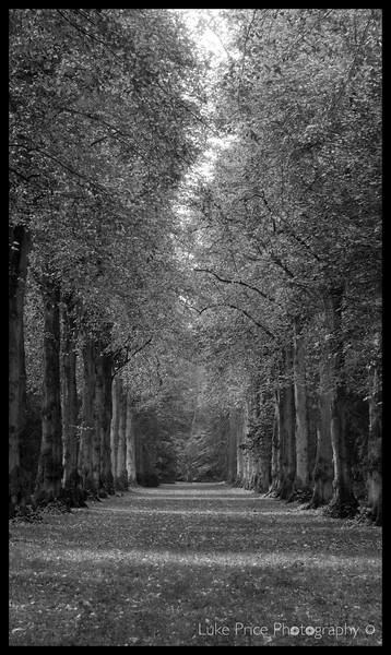 lime avenue