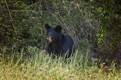 Bears_052817_9983 web