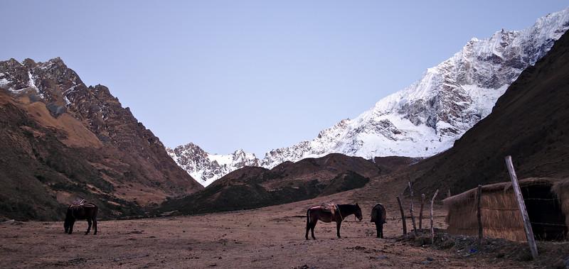 Morning Mules