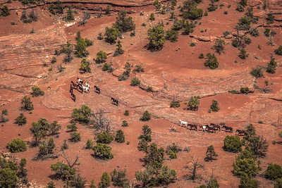 Horse Stroll - Canyon de Chelly