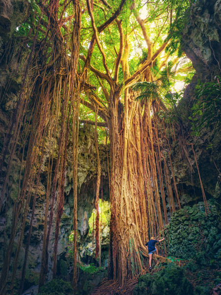 Climbing An Ancient Tree On Okinawa