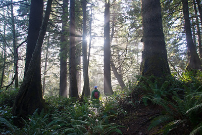 Hiking through a forest of Sitka spruce on a misty morning on the Oregon coast.