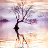 """<h2>Peaceful Evening in Wanaka</h2> <br/>I had a peaceful evening in Wanaka. <br/><br/>There is this tree that sits out in the middle of the lake. It's so unusual. I love the way it reflects back on itself in the smooth water. I was by myself, listening to music on my iPod, and just watching the water as it would calm down then get excited, then calm down again. I swapped out lenses a few times and kept moving around to admire it from different angles. This one was one of my favorites. <br/><br/>- Trey Ratcliff<br/><br/><a href=""""http://www.stuckincustoms.com/2013/06/29/wanaka-tree/"""" rel=""""nofollow"""">Click here to read the rest of this post at the Stuck in Customs blog.</a>"""