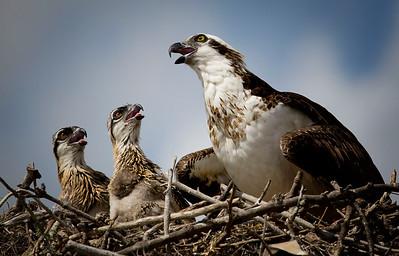 Osprey Storytime