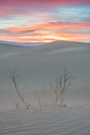 Mesquite Dawn