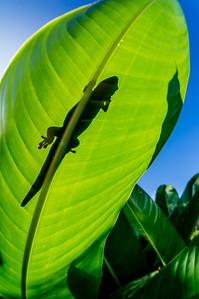 Day(light) Gecko