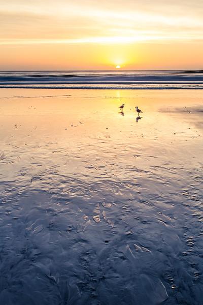 Pebble Beach Sunset Birds
