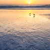 Pebble Beach Sunset Birds
