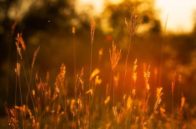 Sunlight grasses