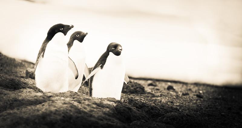 Happy Penguins!