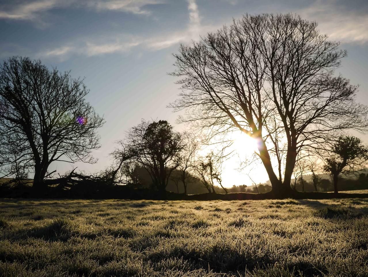 Frosty Morning Rays