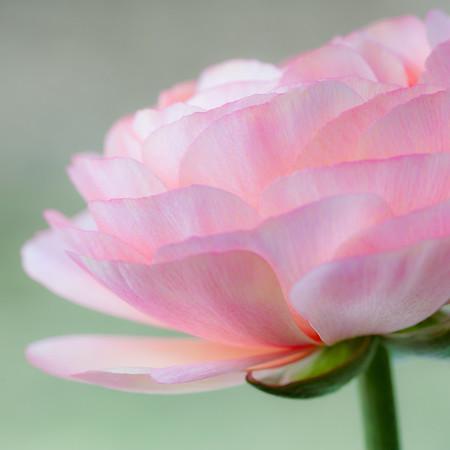 Pink Pastel Layers