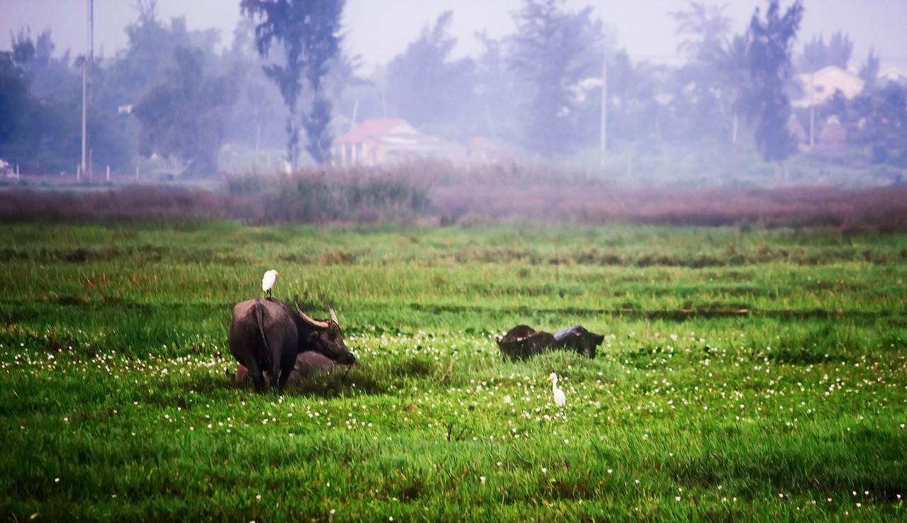 Mama Buffalo