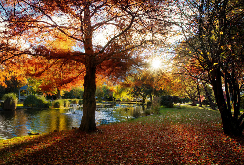 Queenstown Gardens In The Autumn