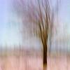 Spirit Tree I, 2008