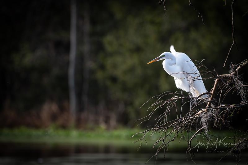 Magnolia Plantation, Audubon Swamp