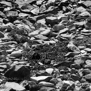 Seaweed and Stones