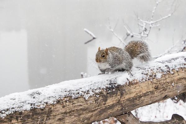 Winter Critter