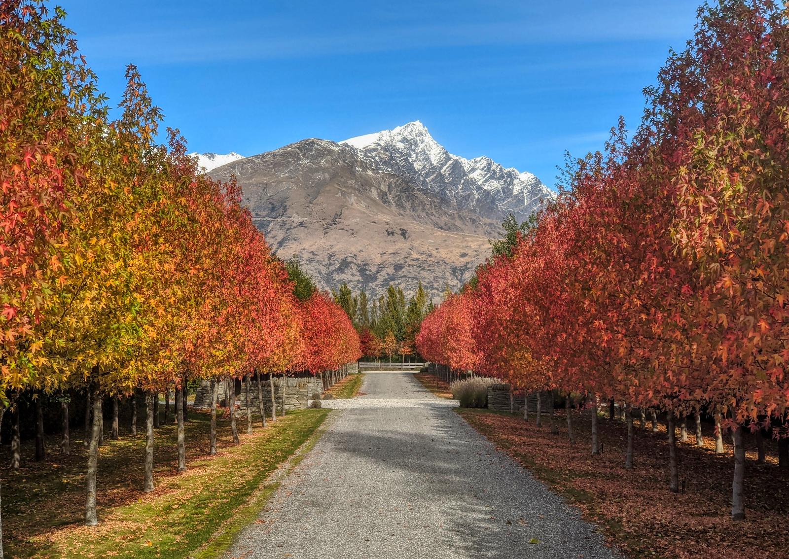 New Zealand Autumn Walk