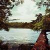 Temperate Rainforest - Tofino British Columbia Canada