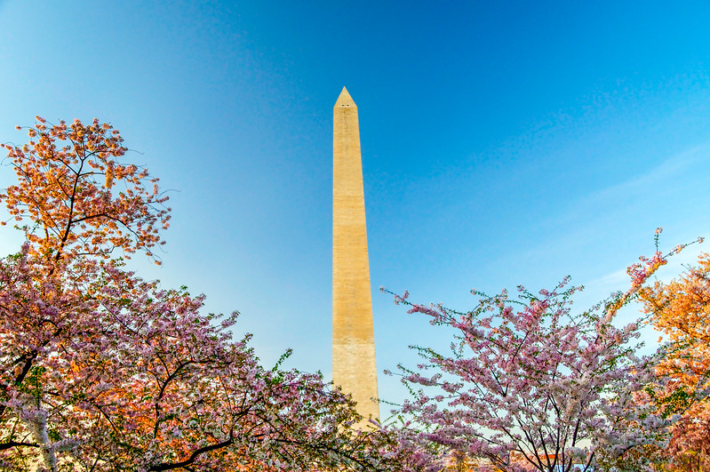 Washington Monument in the Japanese Cherry Trees