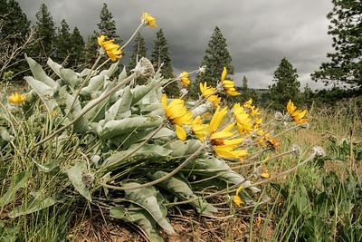 Stormflowers