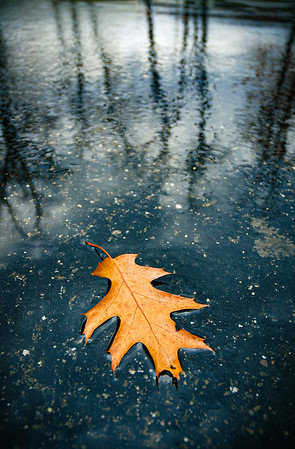 Autumn Leaf Floating at Allegheny National Forest