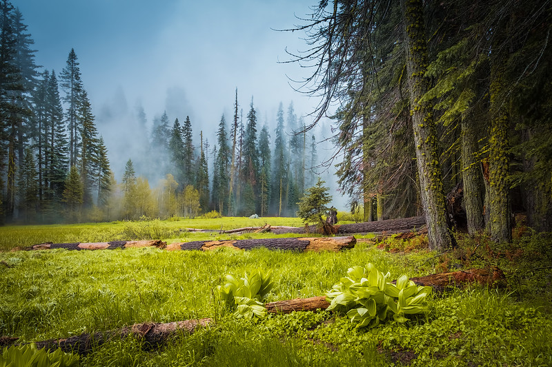 Travel_Photography_Blog_California_Sequoia_National_Park_Crescent_Meadow