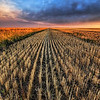 "<h2>Cutting the Wheat</h2> <br/>This shot is from the northern part of Montana, up where the fields go on forever.  These nice crop rows are the ones that get caught in your eyes when you are driving by at super-sonic speeds...but you can still make out single rows like frames in an old movie.<br/><br/>- Trey Ratcliff<br/><br/><a href=""http://www.stuckincustoms.com/2009/06/27/cutting-the-wheat/"" rel=""nofollow"">Click here to read the rest of this post at the Stuck in Customs blog.</a>"