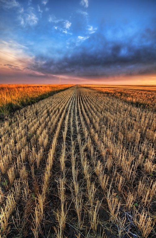 Cutting the Wheat This shot is from the northern part of Montana, up where the fields go on forever.  These nice crop rows are the ones that get caught in your eyes when you are driving by at super-sonic speeds...but you can still make out single rows like frames in an old movie.- Trey RatcliffClick here to read the rest of this post at the Stuck in Customs blog.