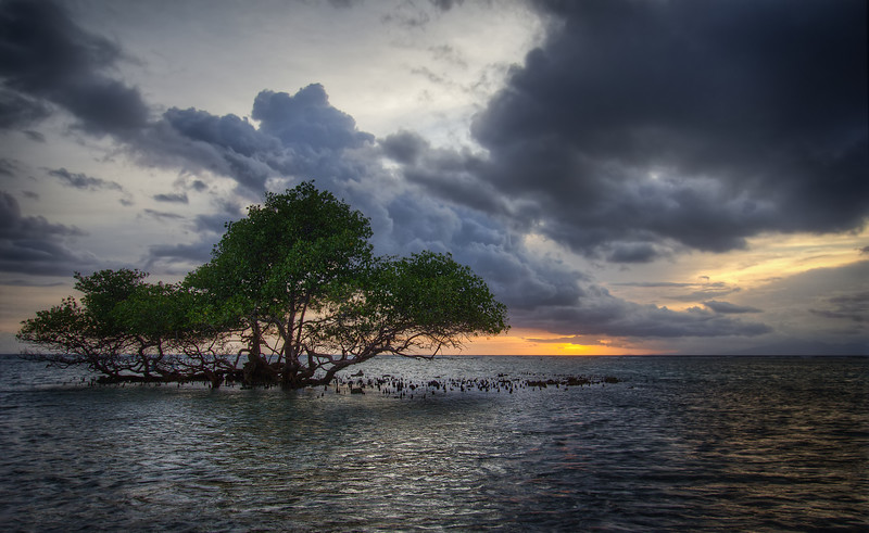 Ocean Tree