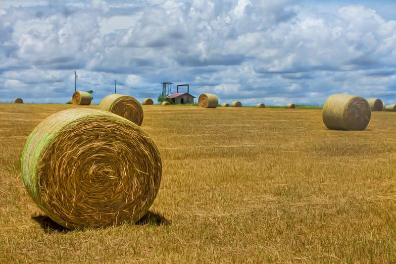 Central Florida farm