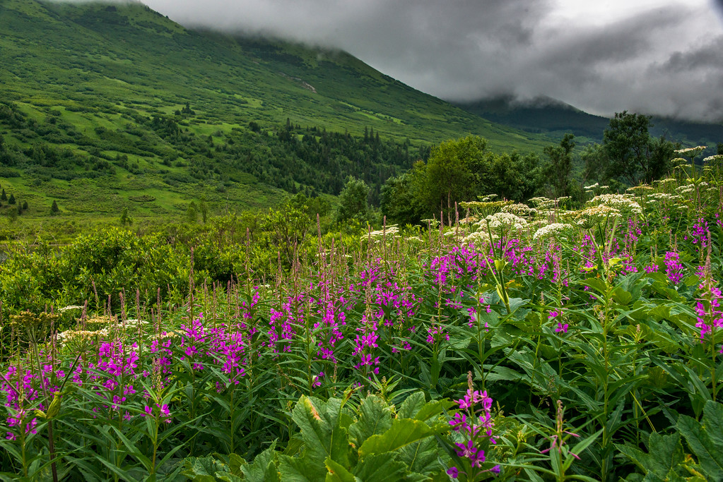 Image_Alaska_South_Summers_0018