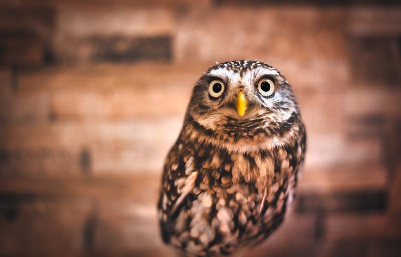 Hyper Bird