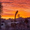 J Tree Tangerine Sunrise