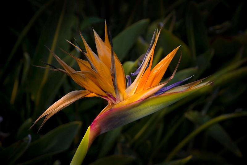 Bird of Paradise, 2007