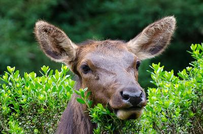 Elk #3 -  Humboldt County, CA