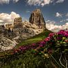 Alpenrose at Cinque Torri
