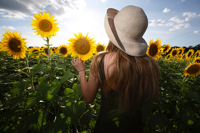 Mackenzie Herro of Oconomowoc, Wis. poses for a photo in a patch of 500,000 sunflowers at a farm in Oconomowoc, Wis. on Thursday, August 15, 2019.  Colin Boyle/Milwaukee Journal Sentinel