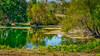 Pond_Reflections