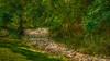 Forest_Runoff