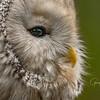 Birds of Prey Center, Awendaw, SC