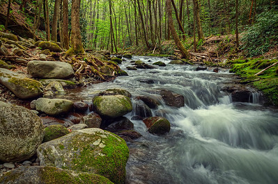 'Among The Smokies' ~ Great Smoky Mountains National Park, TN