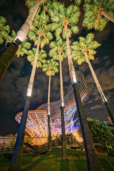Barcelonas Palm Trees