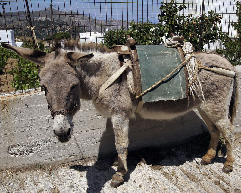 Donkey -- Important to people in outlying communities in particular