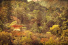 """<h2>Temple in the Trees at Miyajima</h2> <p>This is a shot taken at Miyajima Japan of one of the many temples built around and in the mountain.</p>  <p>See this photo at <a href=""""http://alikgriffin.com"""">AlikGriffin.com</a></p>"""