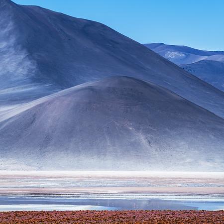Flamingos in the Desert