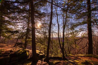 Ledges Trees And Sun